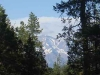 View of Mt. Shasta through the trees