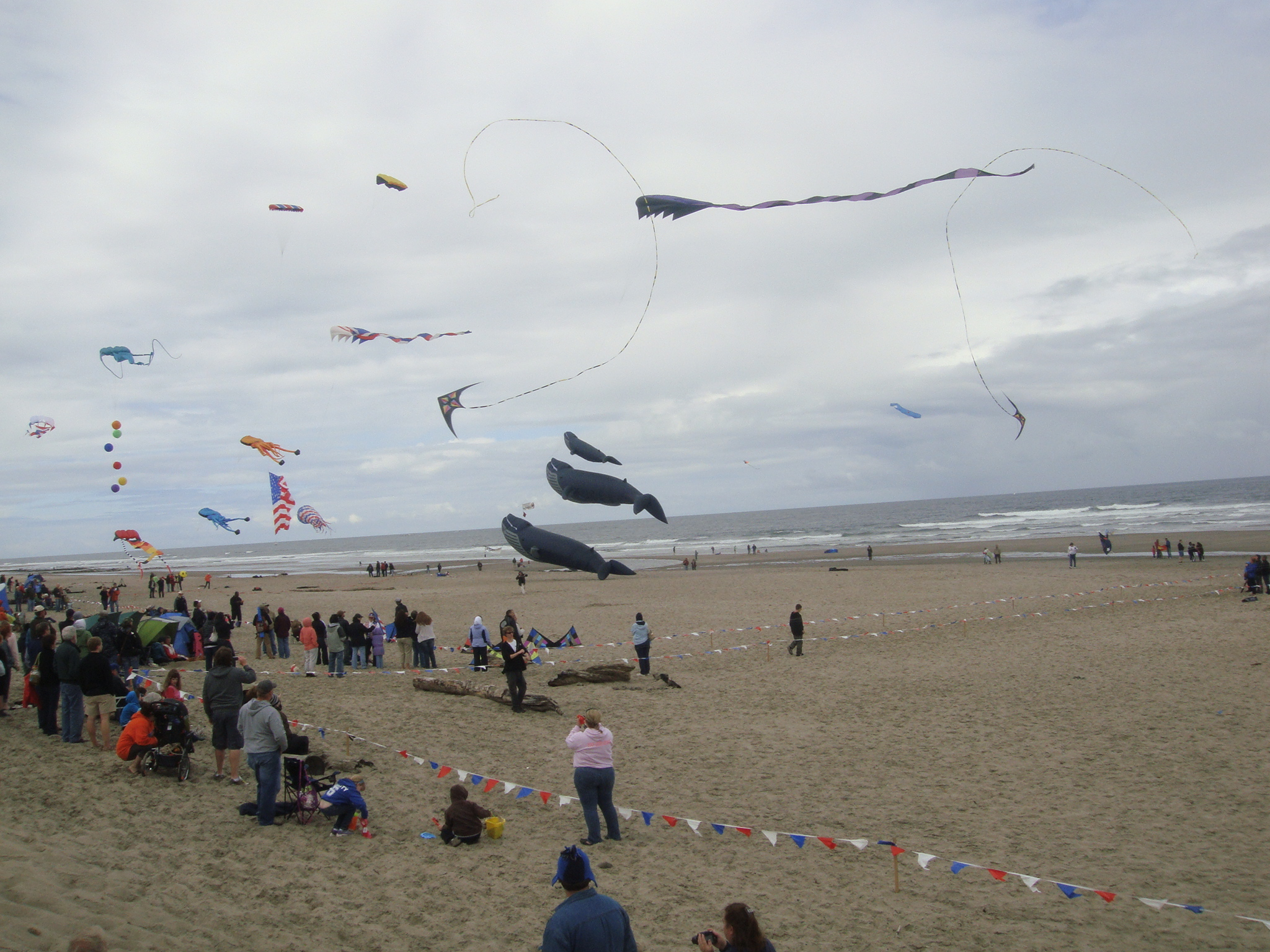 Kites in the Air