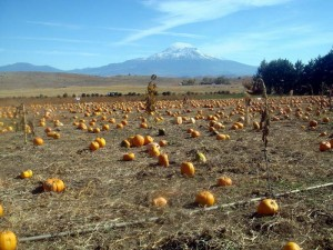 Hunter Orchards Pumpkin Patch